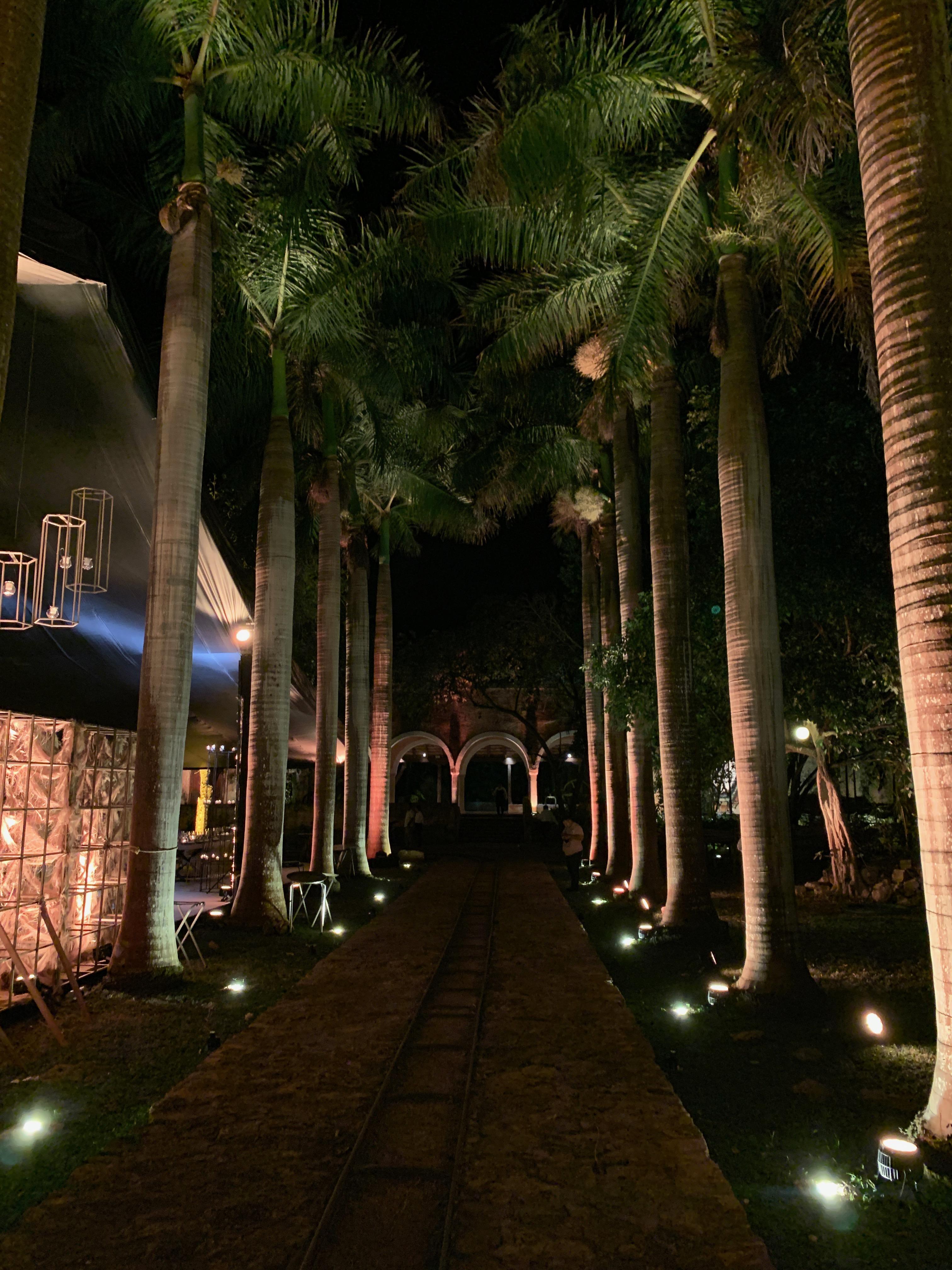 iluminación camino de boda